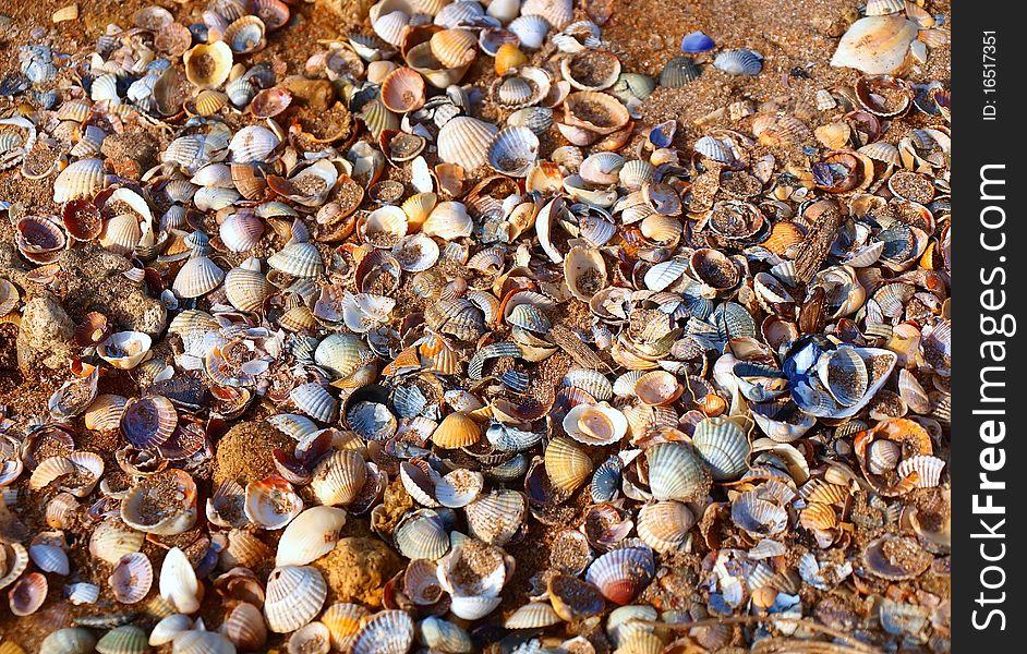 A lot of seashells on a sand beach
