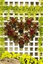 Free Tree Heart Royalty Free Stock Image - 16521426