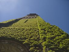 Free Ivy On Church Tower In Boston Royalty Free Stock Image - 16520446