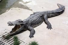 Free Crocodile Farm Royalty Free Stock Photos - 16521138