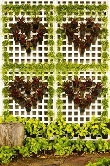 Free Tree Heart Royalty Free Stock Image - 16521446