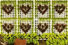 Free Tree Heart Stock Photo - 16521460
