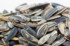 Free Sunflower Seeds Royalty Free Stock Images - 16521739