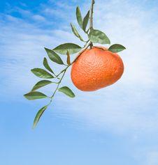 Free Tangerine On Sky Background Royalty Free Stock Photos - 16522178