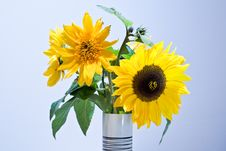 Sunfowers In A White Vase Royalty Free Stock Photos