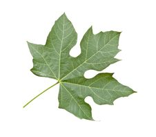 Free Close Up Of Leaf Stock Photo - 16525680