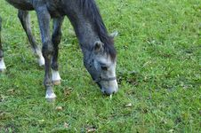 Free Colt On The Meadow Royalty Free Stock Photo - 16525725