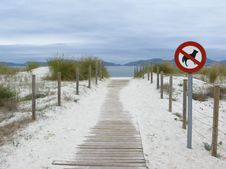 Free No Dogs Are Allowed On The Beach Stock Image - 16525731