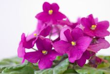 Free Flower Stock Images - 16525954