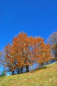 Free Autumn On A Hillside. Royalty Free Stock Images - 16527649