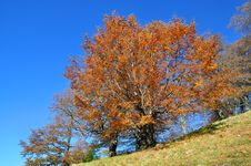 Free Autumn On A Hillside. Stock Photography - 16527672