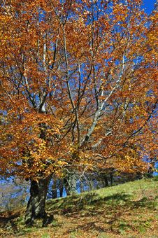 Free Autumn On A Hillside. Stock Images - 16527744
