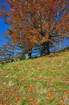 Free Autumn On A Hillside. Stock Images - 16527764