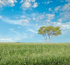 Free Tree On Field Stock Image - 16527871