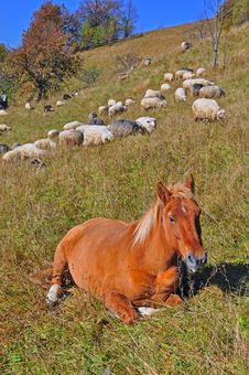 Free The Horse Has A Rest On A Hillside. Stock Photo - 16528480