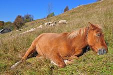 Free The Horse Has A Rest On A Hillside. Stock Images - 16528514