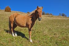 Free Horse On A Hillside. Royalty Free Stock Images - 16528679