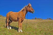 Free Horse On A Hillside. Stock Photos - 16528763
