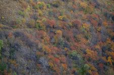 Free Autumn Colors Royalty Free Stock Image - 16529606