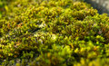 Free Green Moss Stock Photo - 16532030