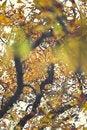 Free Autumn Leaves Stock Photos - 16534403
