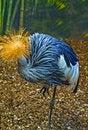 Free Blue Bird. Stock Photo - 16539900