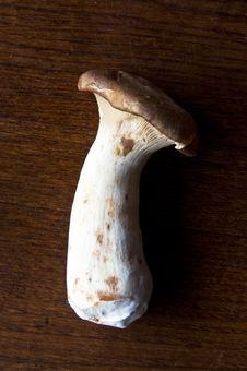 Free Mushroom Stock Image - 16530091