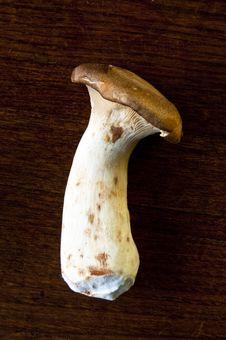 Free Mushroom Stock Photos - 16530113