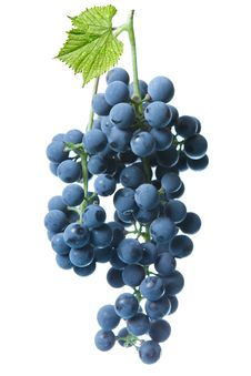 Free Blue Grape With Green Leaf Isolated Stock Images - 16530174