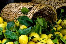 Free Overturned Basket, Lemons, Full Frame Stock Photo - 16530460
