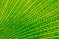 Free Palm Leaf Backlighted Stock Photography - 16532022
