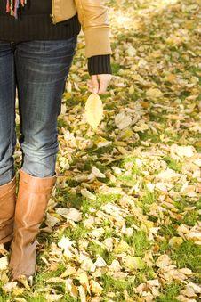 Free Holds An Autumn Leaf Stock Photos - 16533903