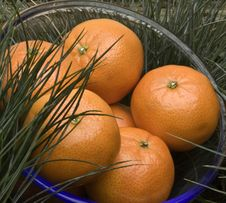 Oranges In Bowl Stock Photography