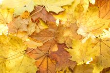 Free Autumn Yellow Leaves Stock Image - 16534031