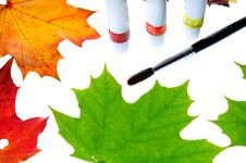 Free Autumn Leaves Royalty Free Stock Photography - 16534177