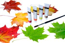 Free Autumn Leaves Stock Image - 16534201