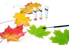 Free Autumn Leaves Royalty Free Stock Photos - 16534228