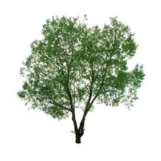 Free Tree Royalty Free Stock Photos - 16534358