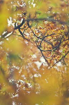 Free Autumn Leaves Royalty Free Stock Photos - 16534388