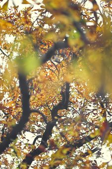 Free Autumn Leaves Stock Photos - 16534403