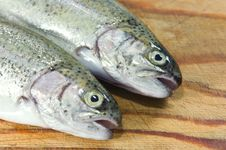 Free Trout Royalty Free Stock Photography - 16534597