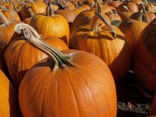 Free Autumn At The Pumpkin Patch Stock Images - 16534974