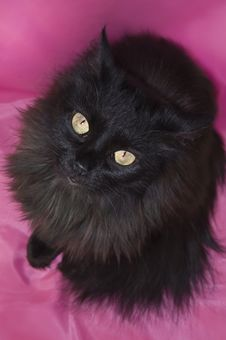 Free Black Fluffy Cat Stock Photos - 16535443