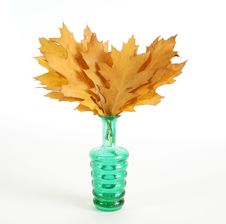 Free Autumn Bouquet Of Oak Leaves In A Vase Royalty Free Stock Photos - 16536198