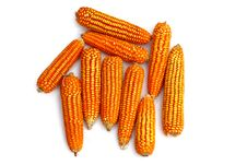 Free Dry Corns Royalty Free Stock Photo - 16536235