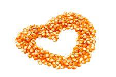 Free Corn Seeds Stock Photo - 16536260