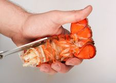 Free Lobster, Cutting Of Tail Stock Image - 16537711