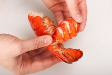 Free Lobster, Pulling The Tail Out Royalty Free Stock Images - 16537729