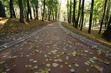 Free Pedestrian Road In The Forest Stock Photos - 16538003