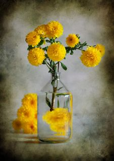 Free Yellow Chrysanthemums Royalty Free Stock Photo - 16538375